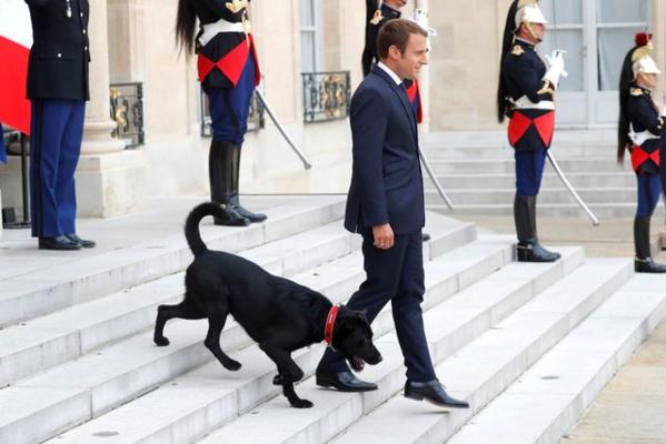 SCANDALE: Macron se fait accompagner par un chien, pour accueillir les dirigeants Africains à l'Elysée