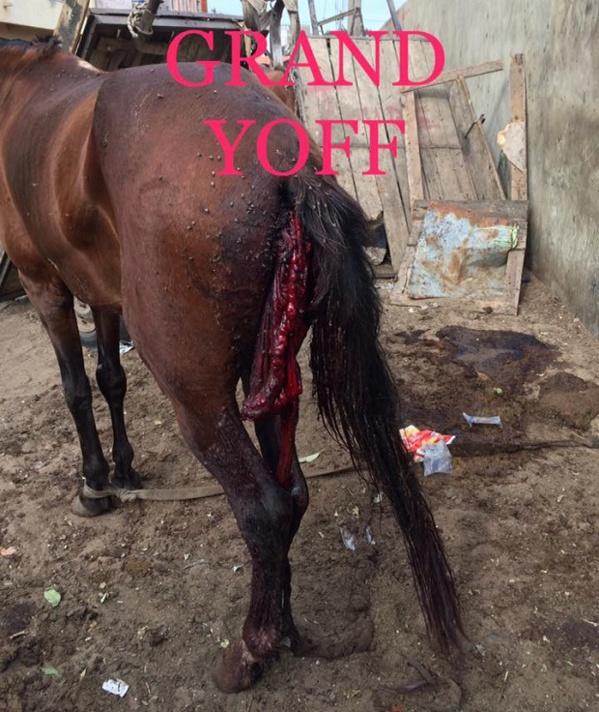 Barbarie et pratiques mystiques: un cheval a vécu une fin tragique et particulièrement cruelle