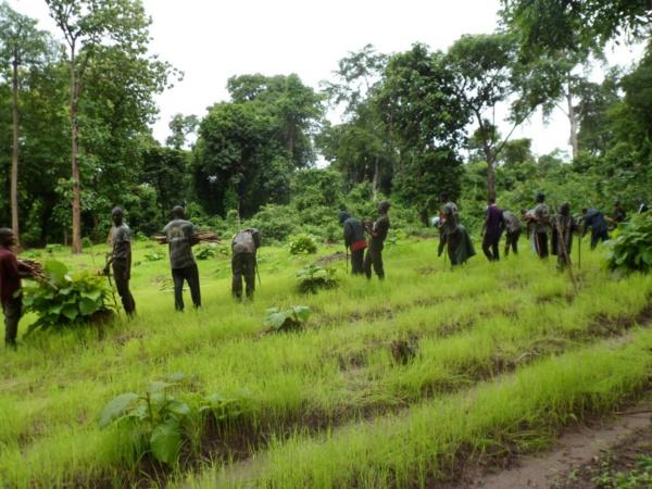 Serait-il possible de rêver d'une paix en Casamance ? (Par Nicolas Silandibithe BASSENE)