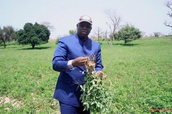 Le Président Macky Sall, héros du monde rural