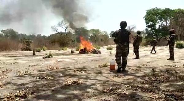 Bignona: L'armée détruit 06 champs de chanvre indien et 10 puits...