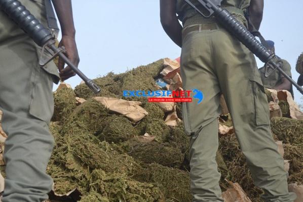 Mbour : Deux militaires cueillis avec 50 kg de Yamba