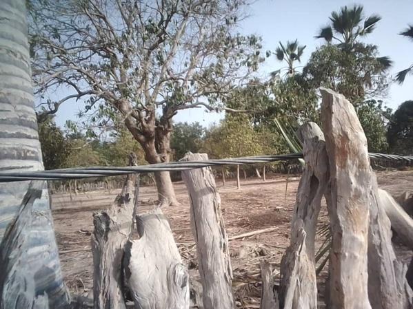 Bignona: Quand la Senelec joue avec la vie des populations du village de Tendouck
