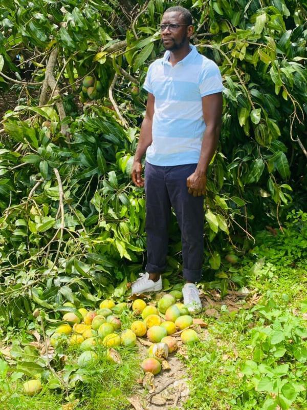 """Amadou Diao, responsable politique de la diaspora : """"Je suis consterné et peiné de voir pourrir les mangues en Casamance"""""""