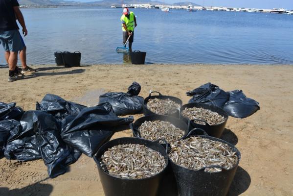 Espagne : des tonnes de poissons morts en mer Mineure à cause d'une pollution aux nitrates
