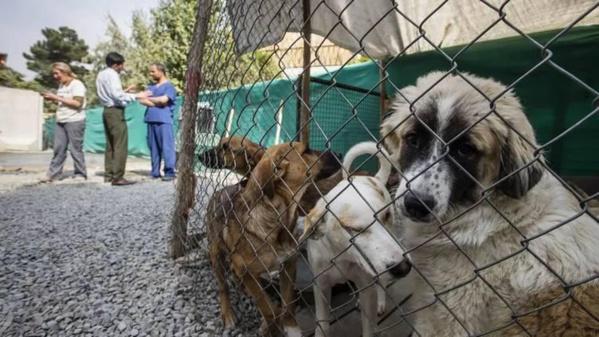 Afghanistan : Une évacuation britannique de 200 chiens et chats fait polémique