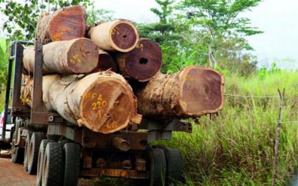 En Gambie, des soldats tirent sur un chauffeur de camion, trafiquant de bois