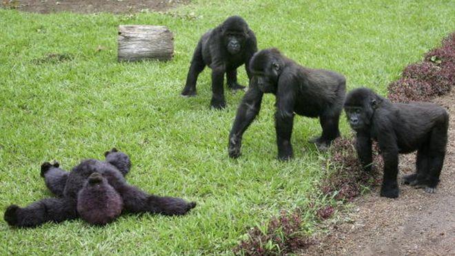 La foudre tue quatres gorilles en Ouganda