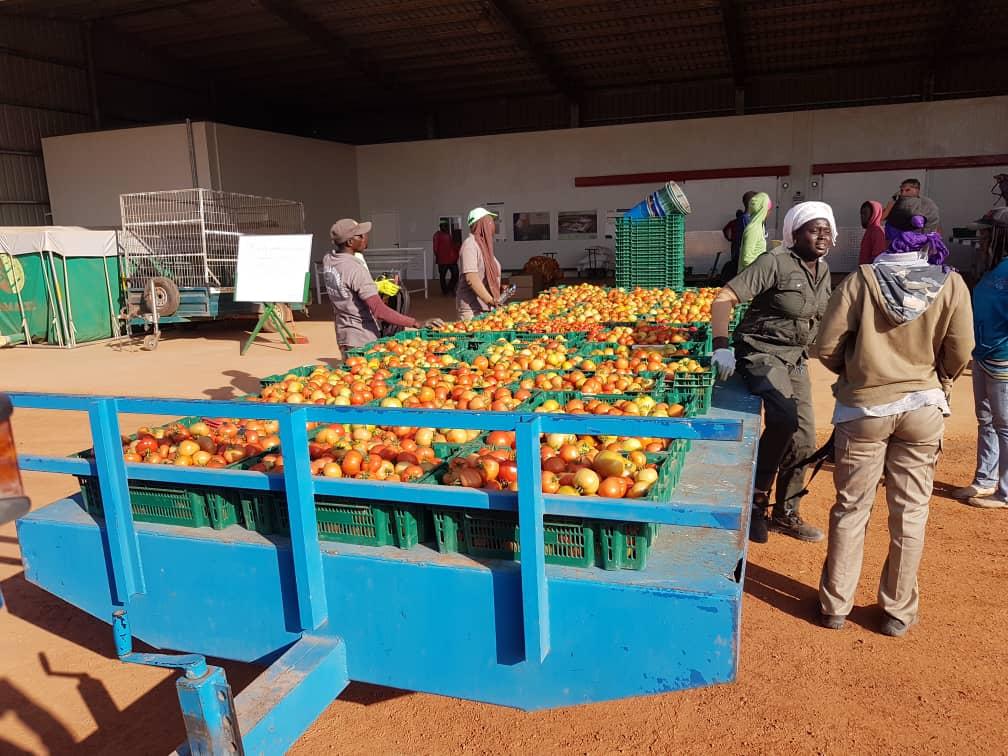 PROJET AGRI-JEUNES : 54 milliards pour créer 150 000 emplois dans huit régions