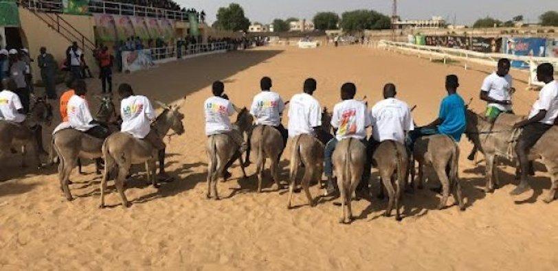Course à Mbacké : L'âne qui porte le nom d'Adji Sarr a fait une chute spéculaire