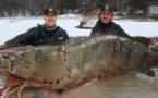Des pêcheurs canadiens attrapent une crevette avec un record de 145 kilos