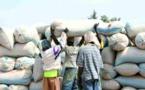 CAMPAGNE ARACHIDIER: Le Sénégal trouve 75 millions $ US pour Suneor