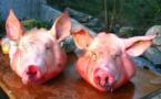 Des têtes de porcs devant la résidence de l'ambassadeur du Maroc à Paris