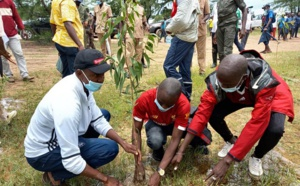 Littoral de Diembering: 10 mille arbres seront plantés
