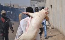 Cote Ivoire: le gouvernement interdit la consommation et la vente de porcs
