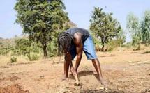 Tiken Jah Fakoly devient cultivateur