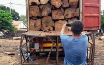 Le trafic de bois menace la forêt en Casamance