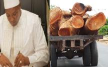 Scandale: Barrow parraine le pillage de la forêt casamançaise (Regardez)