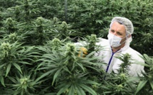 Marlboro, premier cigarettier à investir dans le cannabis