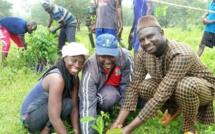 Affiniam: Plus de 1000 arbres plantés en une seule journée