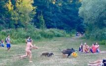 Un nudiste allemand poursuit un sanglier qui lui a volé son sac… et devient une icône
