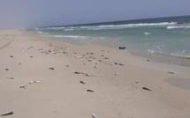 Mauritanie: des millions de poissons morts échoués sur les plages de Nouakchott