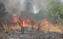 Matam :Le feu ravage des champs d'arachide et de niébé